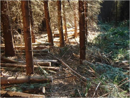 Entretien de la forêt