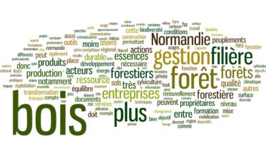 bois forêt normandie